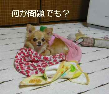 blog2012060502.jpg