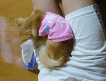 blog2012060606.jpg