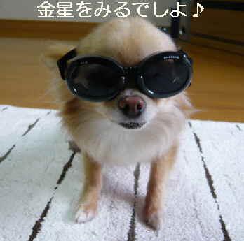 blog2012060607.jpg