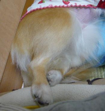 blog2012060803.jpg