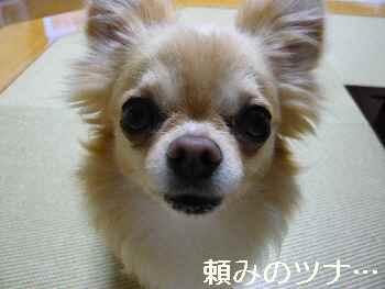 blog2012060901.jpg