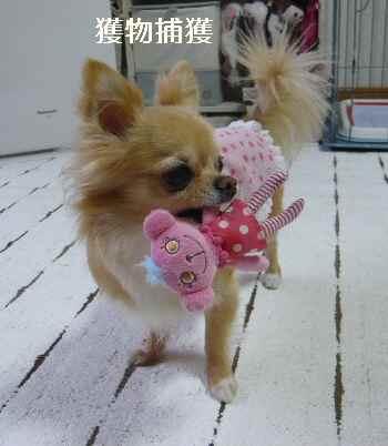 blog2012061304.jpg