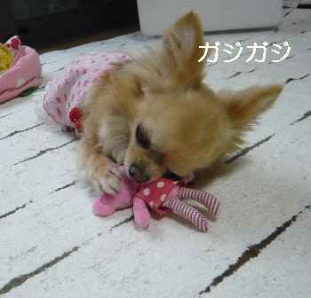 blog2012061306.jpg
