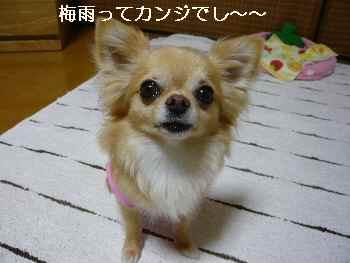 blog2012061602.jpg
