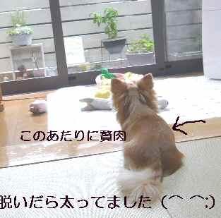 blog2012061707.jpg