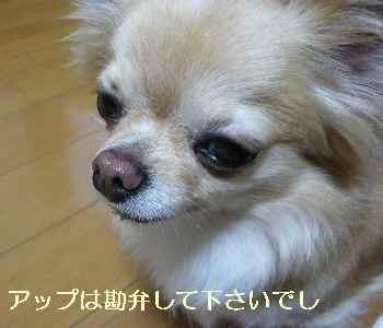 blog2012061902.jpg