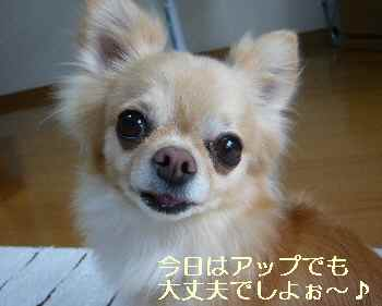 blog2012062001.jpg