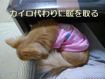 blog2012062203.jpg