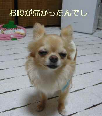 blog2012062401.jpg