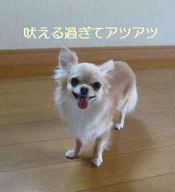 blog2012062603.jpg