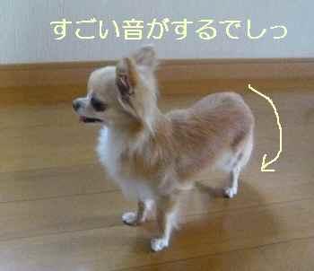 blog2012062604.jpg
