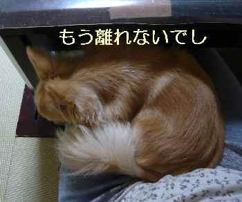 blog2012063002.jpg
