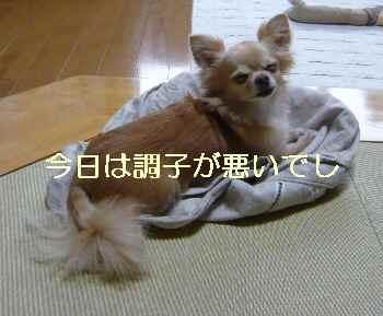 blog2012070301.jpg