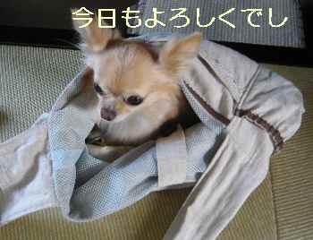 blog2012070401.jpg
