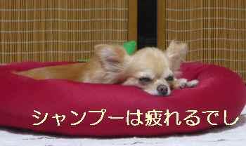 blog2012071206.jpg