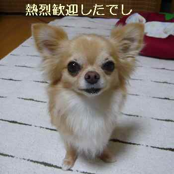 blog2012071503.jpg