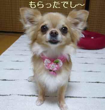 blog2012071701.jpg