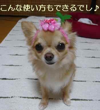 blog2012071702.jpg