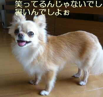 blog2012071901.jpg