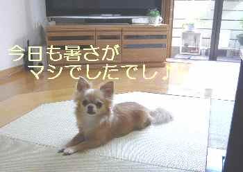 blog2012072202.jpg