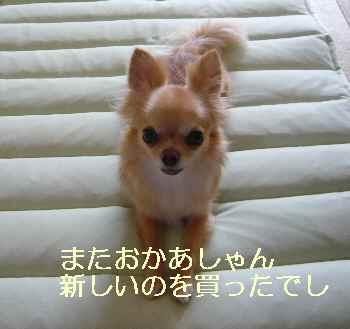 blog2012072302.jpg