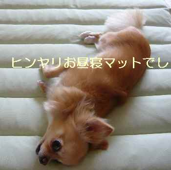 blog2012072303.jpg
