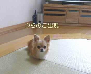 blog2012072602.jpg