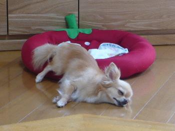 blog2012072701.jpg