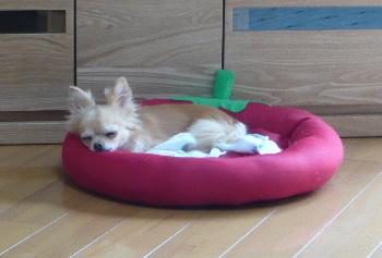 blog201207301.jpg