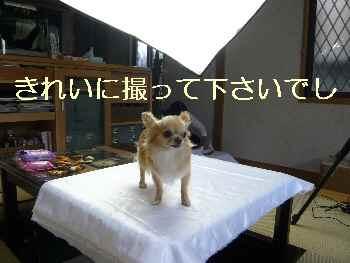 blog2012080101.jpg