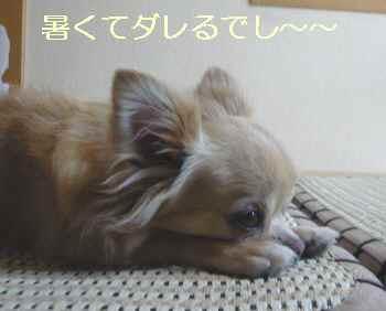blog2012080102.jpg