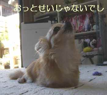 blog2012080202.jpg