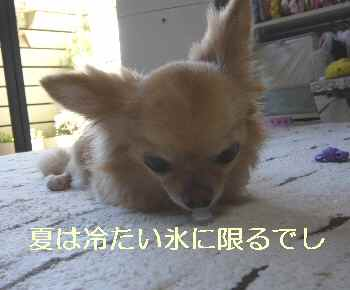 blog2012080203.jpg