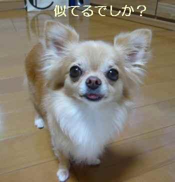 blog2012080705.jpg