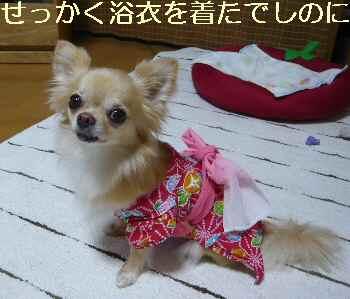 blog2012080805.jpg