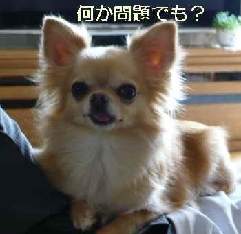 blog2012081302.jpg