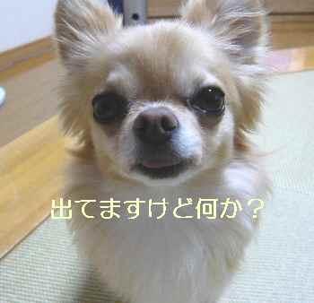 blog2012081501.jpg