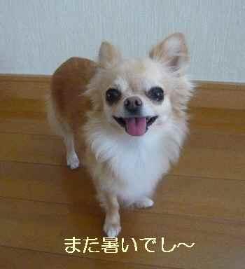 blog2012081601.jpg