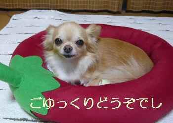 blog2012082101.jpg