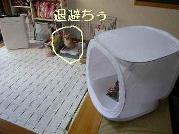blog2012082301.jpg