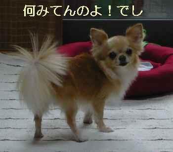 blog2012082805.jpg
