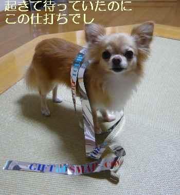 blog2012083001.jpg