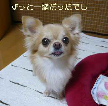 blog2012090301.jpg