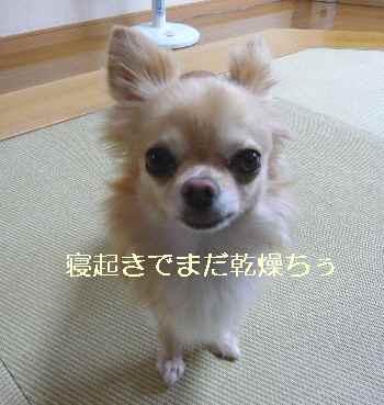 blog2012090503.jpg