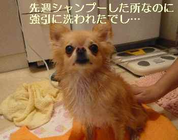 blog2012090702.jpg
