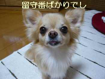 blog2012090804.jpg