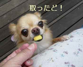 blog2012090908.jpg
