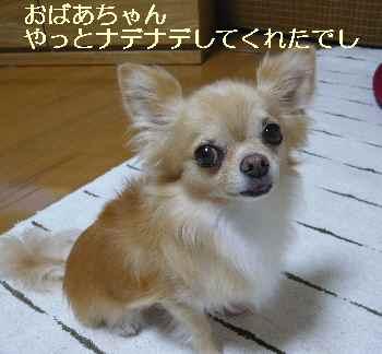 blog2012091503.jpg