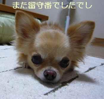 blog2012091601.jpg
