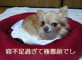 blog2012091703.jpg